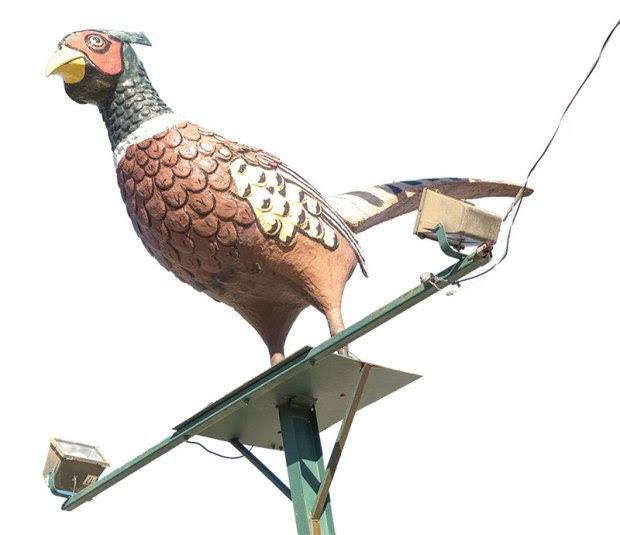 pheasant-signimg_0053