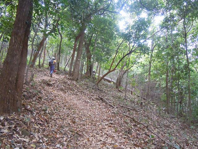 Brahmagiri_Trek_Path_Leaves
