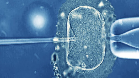 Study points to IVF success chances