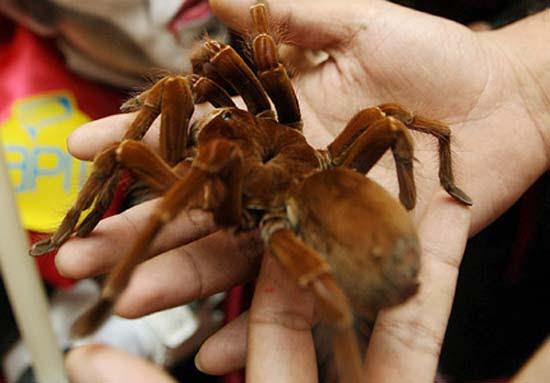 Τα 16 μεγαλύτερα έντομα στον κόσμο (15)