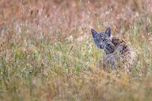 New Photos from Point Reyes National Seashore - Art Wolfe