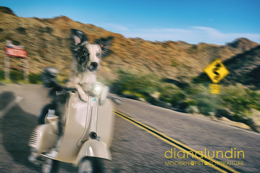Vrooom... Luna on a Vespa - Pet Photography of Diana Lundin