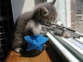 Lý sự của mèo và chuột 2