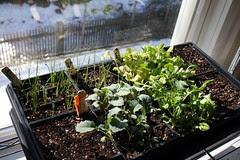 seedlings 020