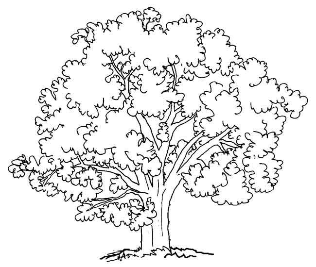 Agaclarnet Ağaç 2