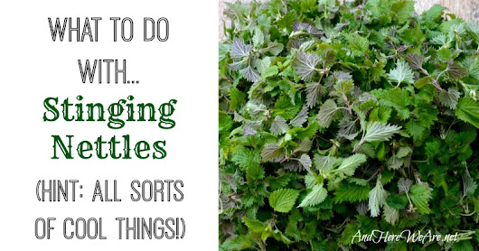 What to Do With Stinging Nettles - And Here We Are