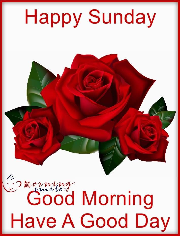 3 Red Rose Good Morning Sunday Wish Pictures Photos And Images For