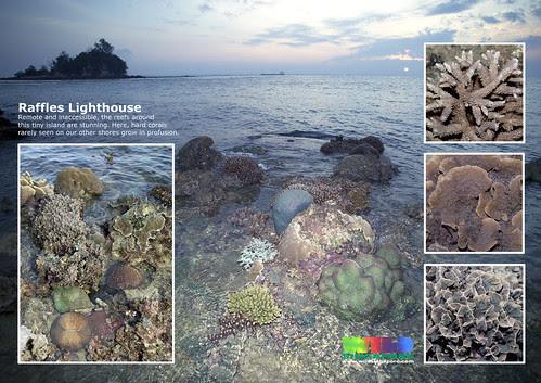 A4 Poster: Raffles Lighthouse