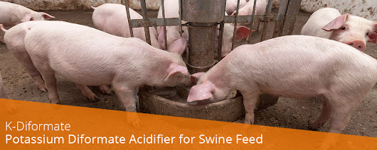 K-Diformate - Potassium Diformate Acidifier for Swine Feed