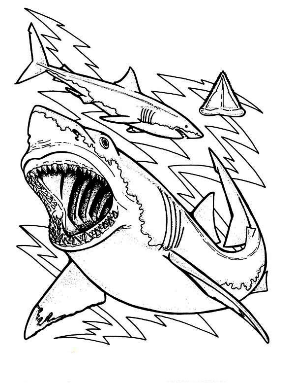 Shark Outline Drawing at GetDrawings   Free download