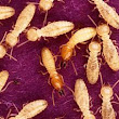 Identifying signs of termite infestation.