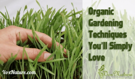 Organic Gardening Techniques You'll Simply Love | Vox Nature