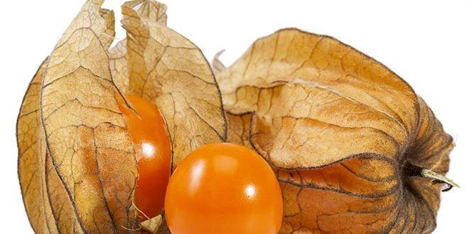 Fruta physalis – Seus 14 grandes benefícios para saúde