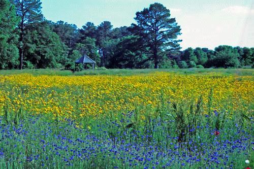The Bunny Morgan Memorial Wildflower Meadow by bahayla