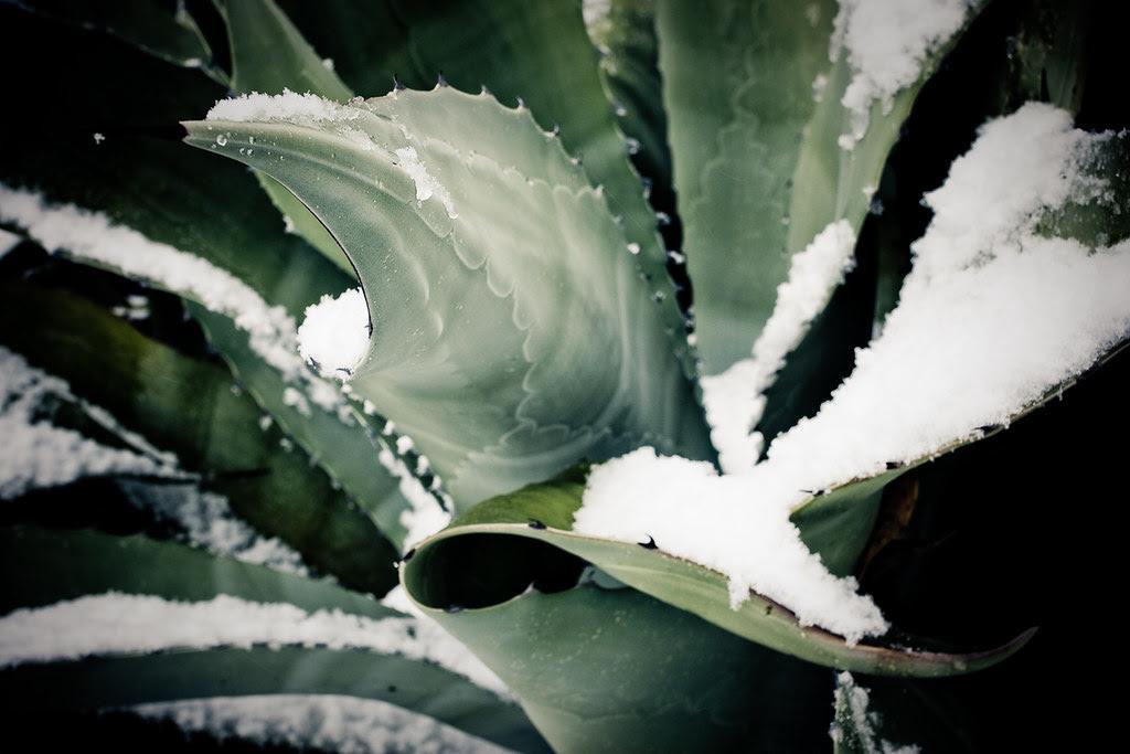 Austin Snowpocalypse 3-72