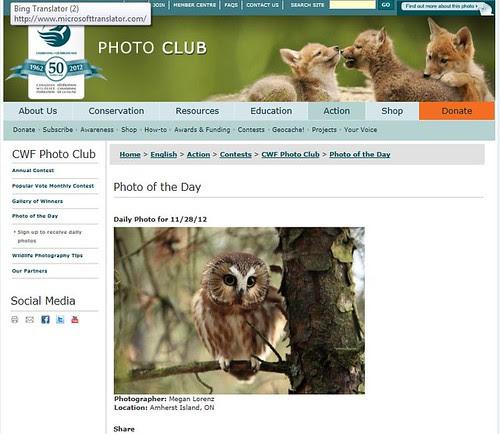 Saw-Whet in Owl Woods by Megan Lorenz