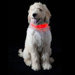 FurHaven Pet Dog Collar   Safety LED Light-Up Dog Collar OR Leash Extender (Red, Collar - Small)