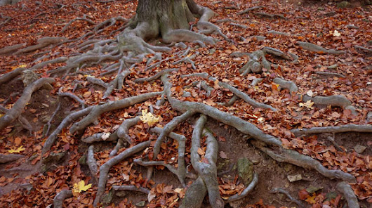Tree Root Killing, Removal, and Cutting