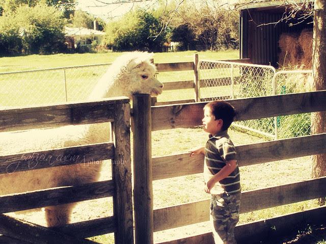 Ale y la alpaca