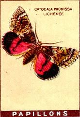 papill 4
