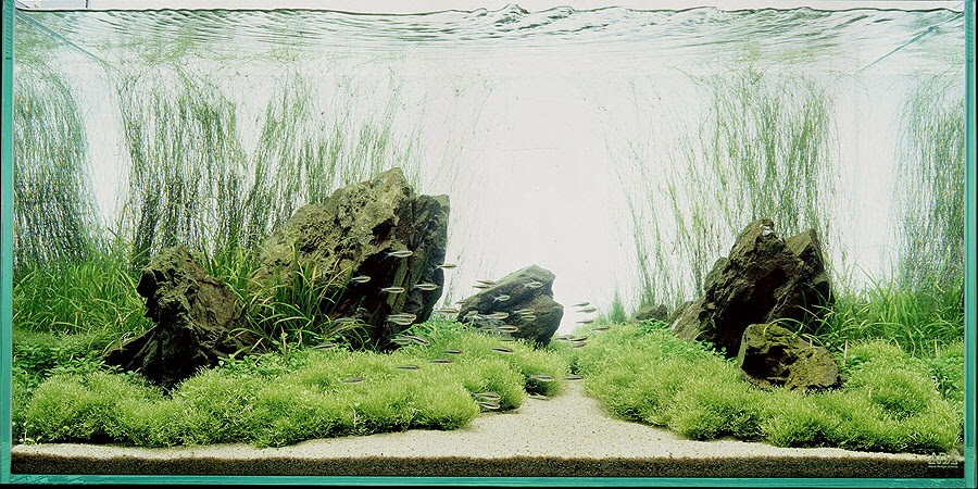 How to Create Aquascape with Natural Style AQUASCAPER ...