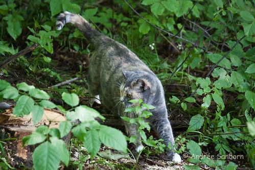 Possum Takes a Hike-9.jpg
