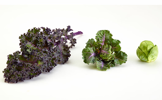 When Kale and Brussels Sprouts Combine - Modern Farmer