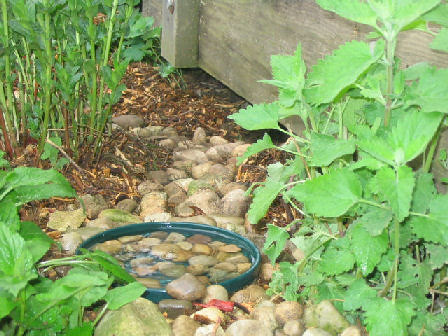 toad bath or toad pond