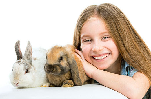 RH2 rabbit vaccine now in stock at Quantock Veterinary Hospital
