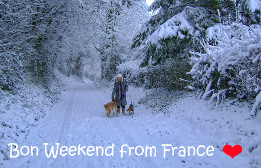Snowy newsletter from France
