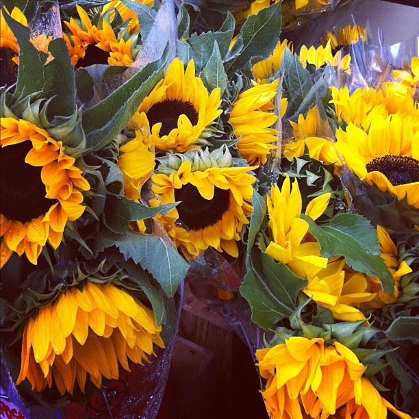 sunflowers in the ran