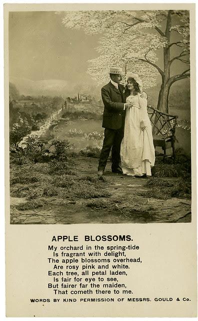 Apple Blossoms_tatteredandlost