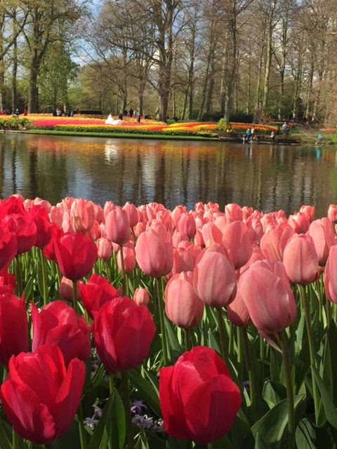 Tips for Visiting Keukenhof Gardens - An Unstoppable Journey