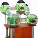 Fish Metropolis | 10 Crazy Aquariums | This Old House