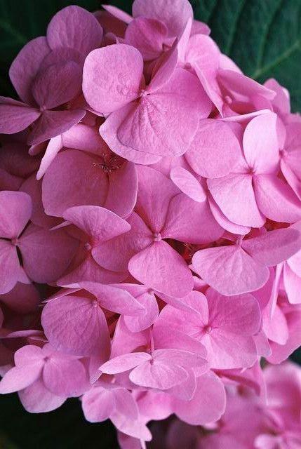 Pink  color change