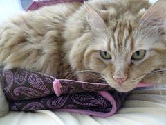 Jasper in Jeni's brown bag