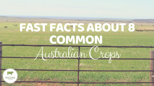 Fast Facts About 8 Common Australian Crops