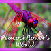 Peacockflower's World blog logo