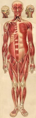 anatomie gmfemm4