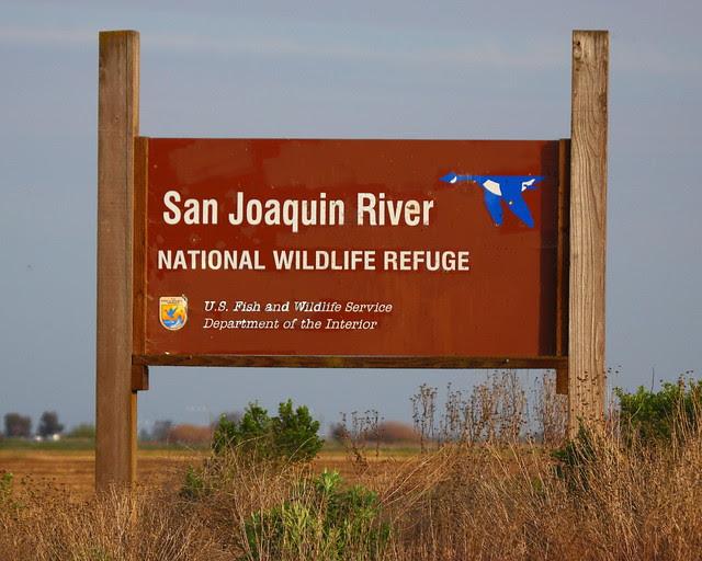 IMG_8728 San Joaquin River National Wildlife Refuge