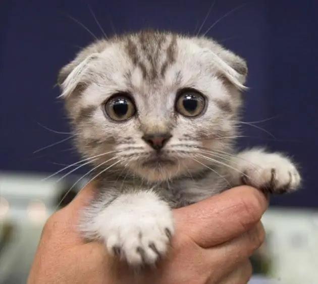 gato-triste-9