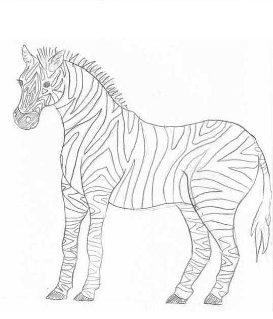ausmalbilder tiere afrika  cartoonbild