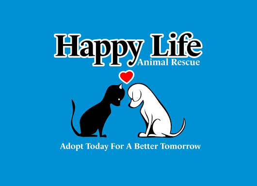 July Charity: Happy Life Animal Shelter