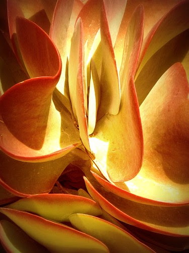 Desert Cabbage Abstraction por scilit