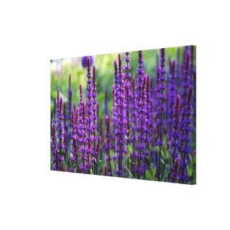 Lavender Lilac Photo Canvas Stretched Canvas Prints