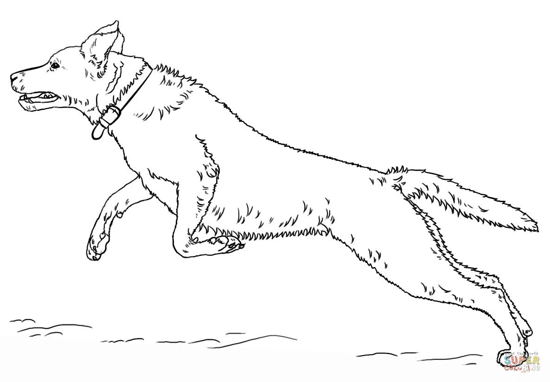 Ausmalbild: springender Labrador Retriver | Ausmalbilder ...