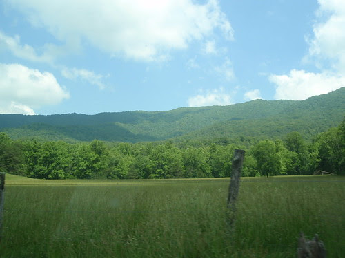 cade's cove meadows (1)