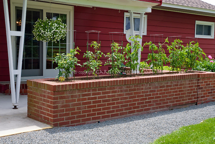 Tomatoes in raised garden bed made of brick, useful for ...