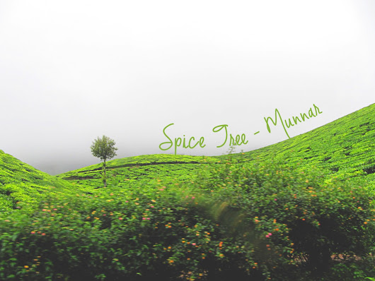 { Spice Tree, Munnar } – The Property