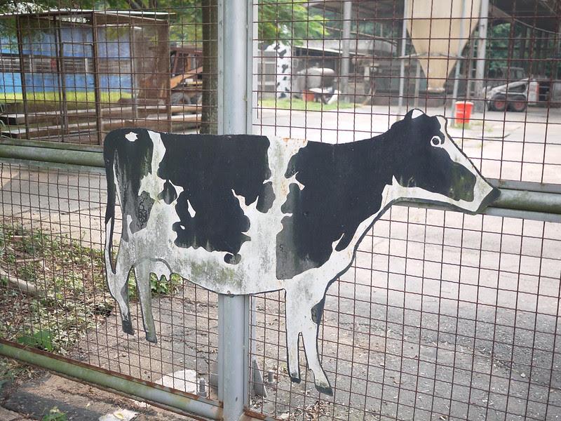 來去嘉大買鮮奶